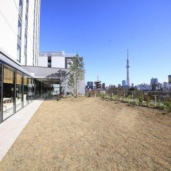 東京のシンボル、スカイツリーも望めます。
