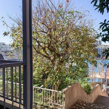 アパートの手前に大きな柿の木がありました。※写真は前回募集時です。