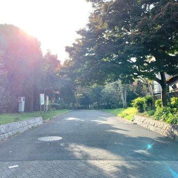 緑豊かな道を通って駅へ向かいます。