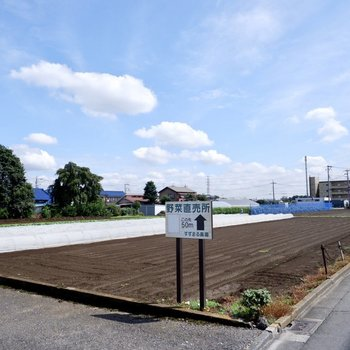 道中は畑が広がっていて、なにやら気になる看板が。