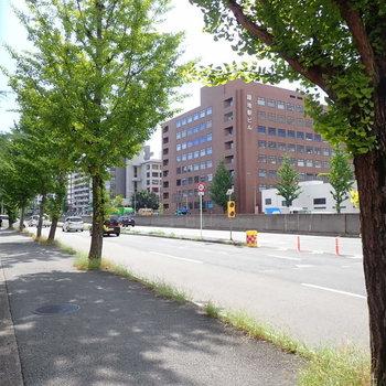 共用部】こちらは大通りに面したほうです。木陰を踏みながら駅まで。