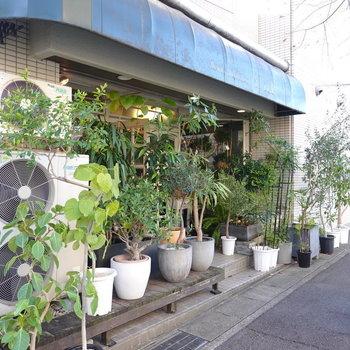 植物のお店もあります。観葉植物を買うときはここにお世話になりたい◎