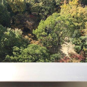 下を見下ろすと楽水園!緑に癒やされる〜……(※写真は6階の別部屋からの眺望です)