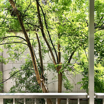 眺望は癒しのグリーン。集合マンションの1角でなんちゃって中庭のようでした。