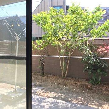 さて、お庭へ。植栽のおかげで人目が気になりません。