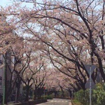 春には桜が見頃になります◎