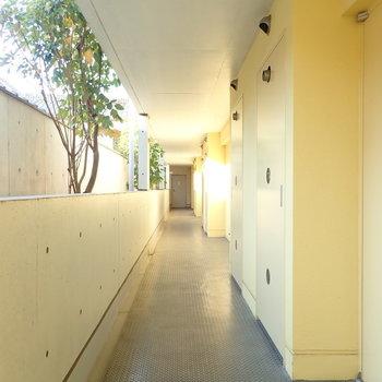 共用部】レモンイエローの廊下です。