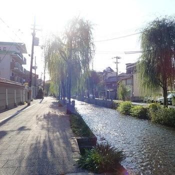 周辺環境】こちら!白川と呼ばれる、なんとも京都らしい川のある通りなんです!