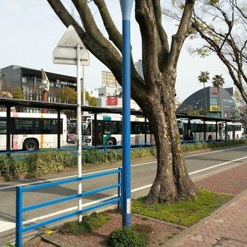 玄関出るとすぐにバスのロータリー。