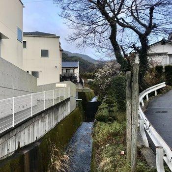 建物の隣には小川も流れていました。素敵だなぁ…この木なんの木だろう