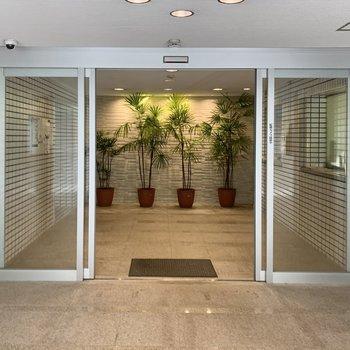 エントランスでは観葉植物とダウンライトがお出迎えしてくれますよ。