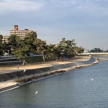 武庫川のほとりをぶらぶらしたいんです