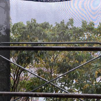 眺望は緑豊かな木々。※写真は修繕工事中です