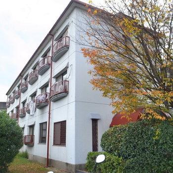 緑の低木に囲まれたマンション。窓の前は田んぼが広がっています。