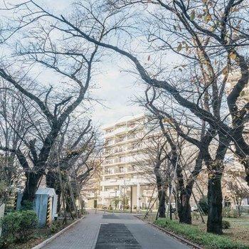 名前の通り、桜の名所として有名な団地です。