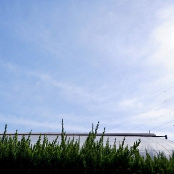 生け垣の上には広がる青空。