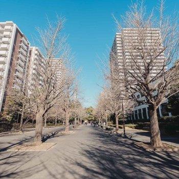 「いちょう通り八番街」という名前のとおり、いちょうの木のある大きな遊歩道がすぐ近く。ここを真っ直ぐ行けば駅に出られます。