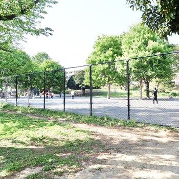 近くには緑豊かな広場がありました。