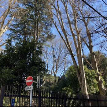 新宿御苑が近く、緑に癒されることができます。