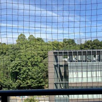 舞鶴公園の緑をのぞめますよ。鳥よけネットも安心感◎