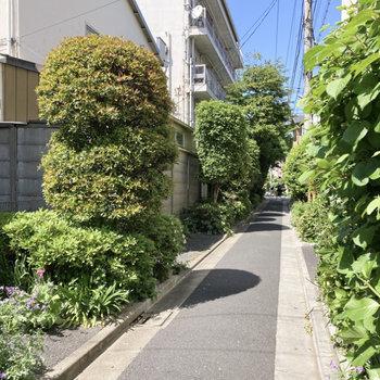緑豊かな小道を歩いてお部屋へ。