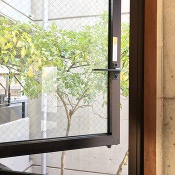 窓からはシンボルツリー。癒やしです。