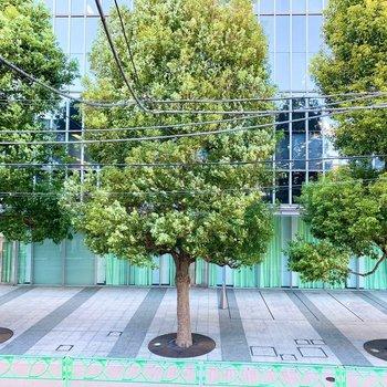 冬でも美しい緑の大きな木が見えて一年中癒されます。
