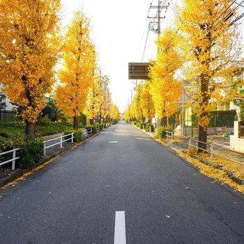 駒沢大学キャンパスも近いので秋はこんな道中です◎