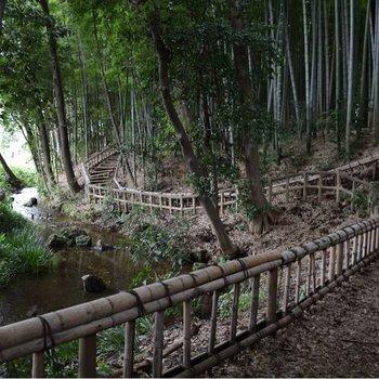 近くの竹林公園も綺麗!!