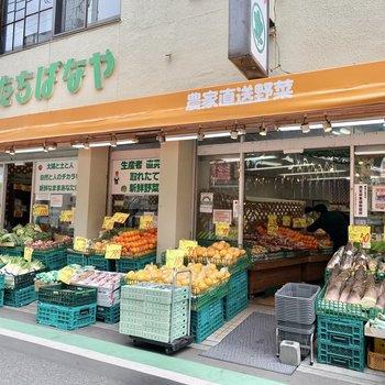 産地直送のとれたて野菜のお店も近くに。