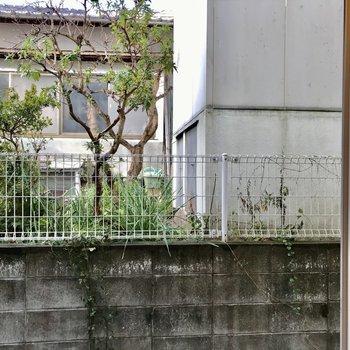 洋室の窓からはお隣さんのお庭?かな。レースカーテンがあると良さそうです(※写真は同間取り別部屋、清掃前のものです)