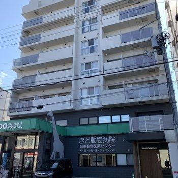 1階は動物病院!ちなみに、京阪電気鉄道京阪線とJR「野江駅」から徒歩9分ほどの距離でした。