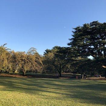 緑豊かな新宿御苑。定期的に訪れたいな。