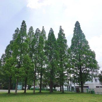 針葉樹のある公園もありました。ピクニックなんかも楽しめそうです◎