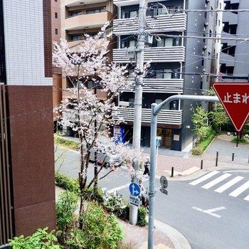 近くの通り。春の訪れを感じますね。