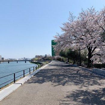 すぐ近くに川が。春は桜がきれいですよ〜