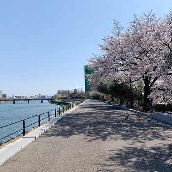 小窓からの桜並木の正体はこれ!奥までずらーっと並んで本当にきれい。