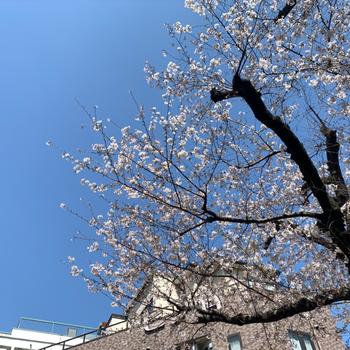 【周辺環境】春が待ち遠しい!