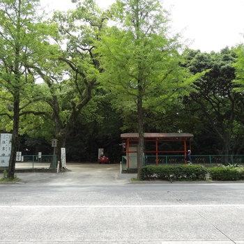 目の前は住吉神社ですよ〜!