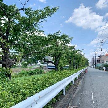 駅近ですが川沿いで緑豊かな場所です。