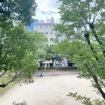 目の前には公園。木々の緑にうっとり。