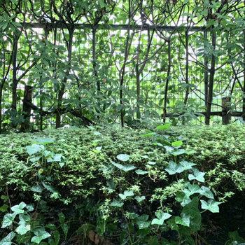 木々で覆われており、外からの視線は気になりませんよ。