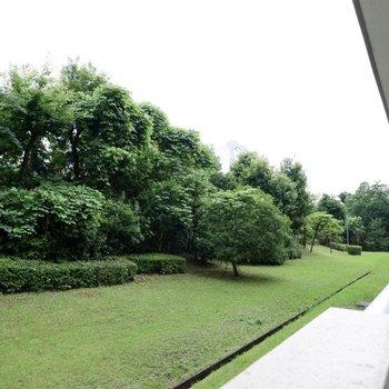 左右どちらも緑豊かな眺めです。