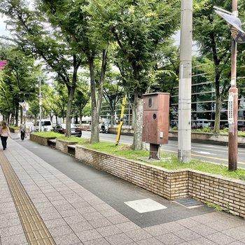 【周辺環境】こちらは駅へつづく通り。おだやかできれいな並木道は歩くのが楽しくなります!