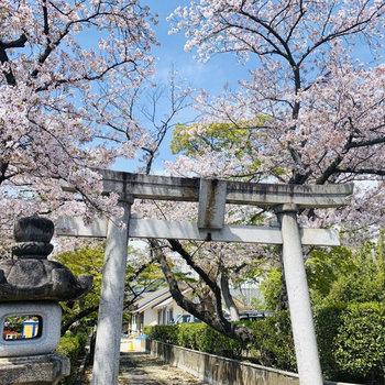 駅までの道には春には桜が満開になるお寺があります。