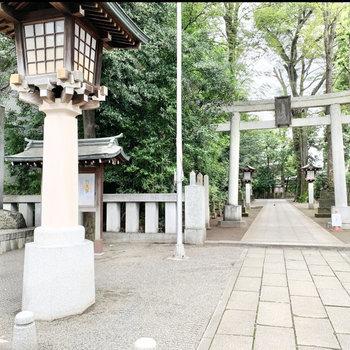 隣には荻窪八幡神社が。樹林がいい感じです◯