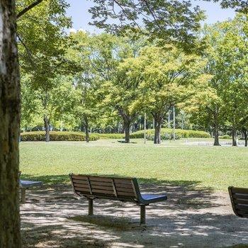 木陰でほっとひと休み。木々に季節のおとずれを感じて。