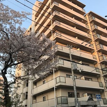 パシフィック神戸桜筋北館