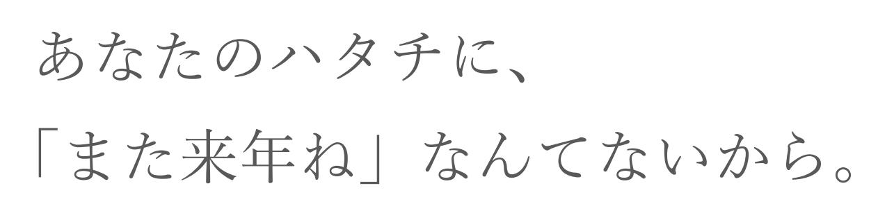京都きもの友禅
