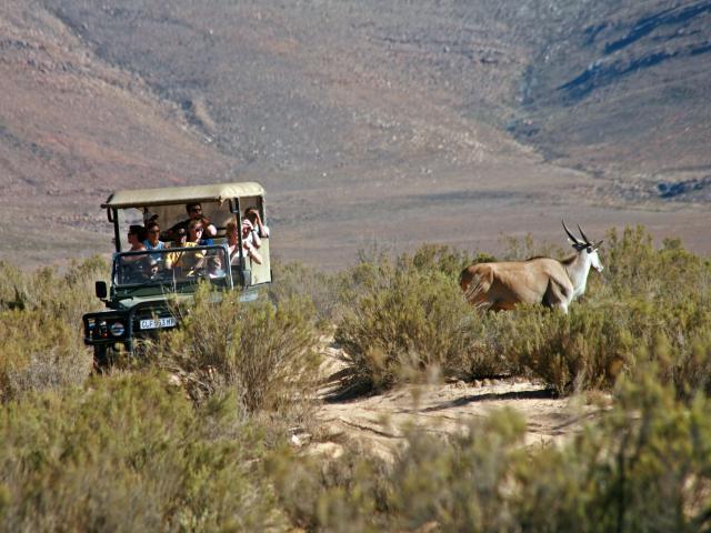 アフリカ サファリのオプショナルツアー・現地ツアーを比較